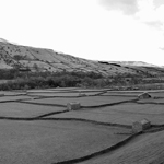 Fields in Swaledale