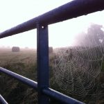 Misty cobwebs